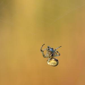 Pavúči minimalizmus
