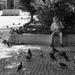 V tieni holubov