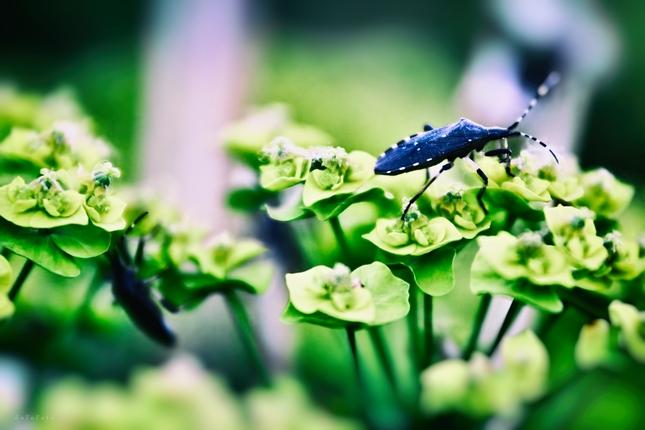 Bug's life II