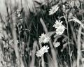 Dream of a meadow