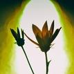 Kvety neznámej žene