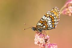 Dobrú noc motýlik