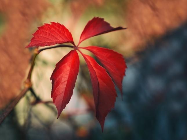 Čaro jesenného večera