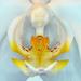 Zmyselná Orchidea 02