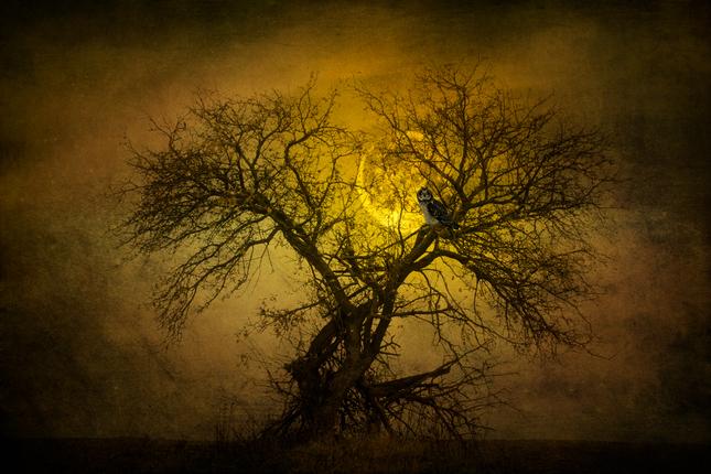 Strom poznania