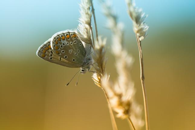 Modráčik vo svetle