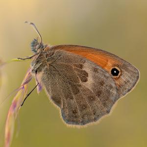 Motýľ z Edenu