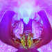 Zmyselná Orchidea