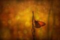 Večerné zátišie s motýľom