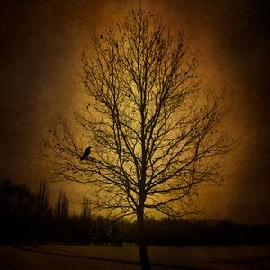 Strom večného života