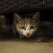 kitty watch you