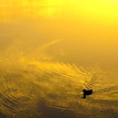 Na zlatom rybníku