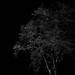 Biely strom v tme