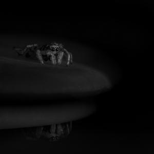 V temnotach