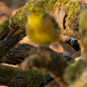 Jarný stalking