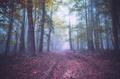 Lesný abstrakt
