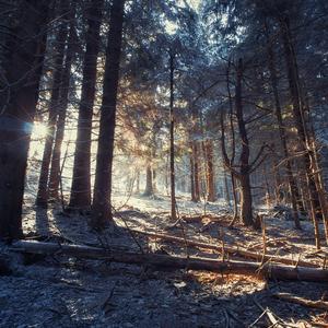 Zima je späť (i am light)
