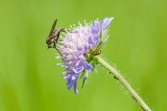 local biodiversity :)