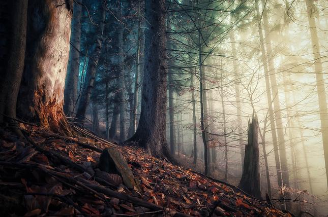 lesnej remake