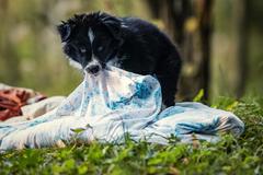 Zoro - etalón dobrého psa