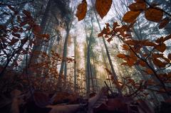 od podlahy lesnej