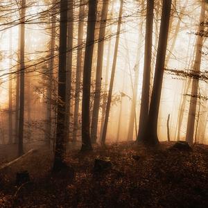 lesná