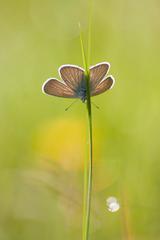 motyl na trave