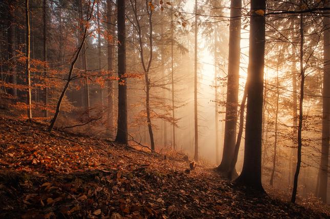 ranná hmlová