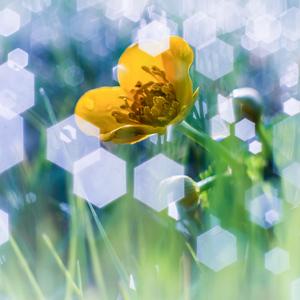 Žltá v uholníkove
