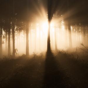 Tajomstvá lesné