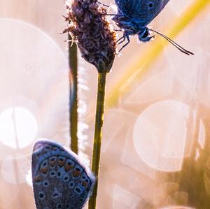 Modráky