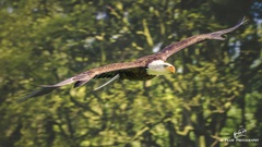 Eagle fly free...