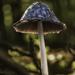 """""""Magic"""" mushroom"""
