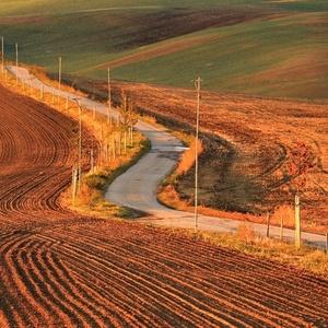 Cesta v polích