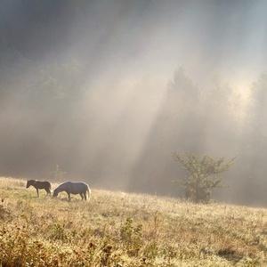 Ráno v pastvinách