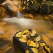 Podzim na Suché Kamenici