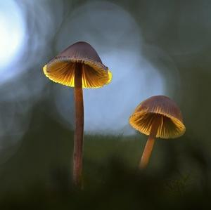 Lampičky v mechu