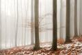 Mlhavé Chřiby