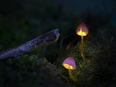 Kouzelné lampičky