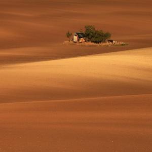 Ostrov v poušti