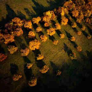 Jeseň z výšky II.