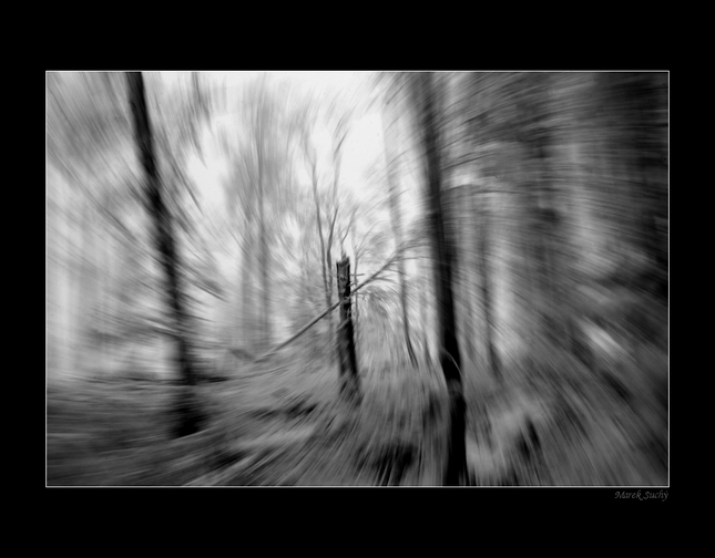 Príbeh lesa IV.