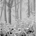Príbeh lesa I.