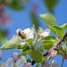 Jarná makačka