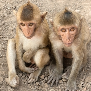 opičky ....