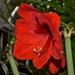 Detail kvetu 1