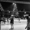 Ice skating under the tree