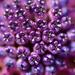 HDR kvetu