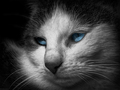 Blue-eyed beauty