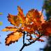 Jesenna